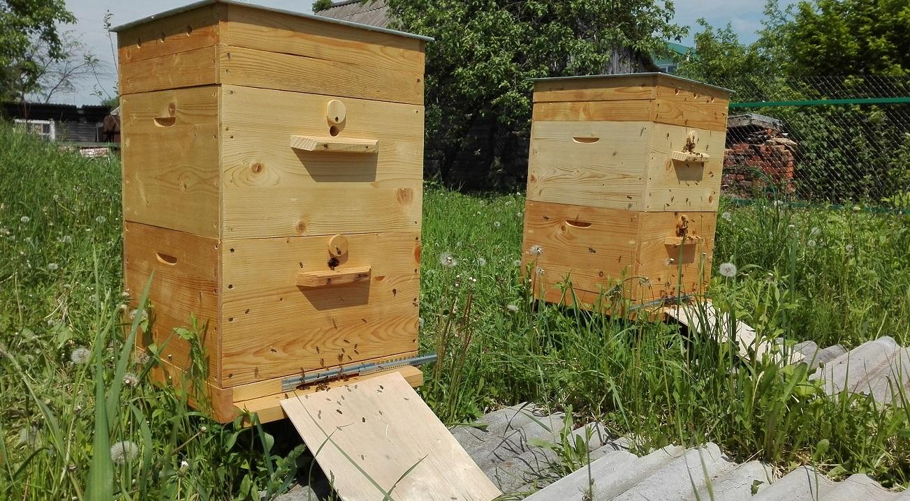 Пчелиные улья сделай сам своими руками 438